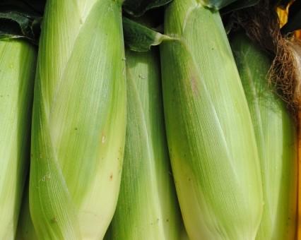 8月31日(金)お届けの野菜セット