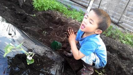 5月28日(火)お届けの野菜セット