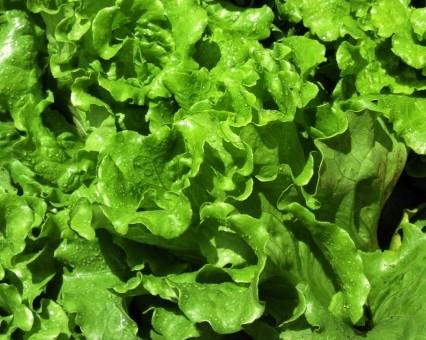 6月28日(金)お届けの野菜セット