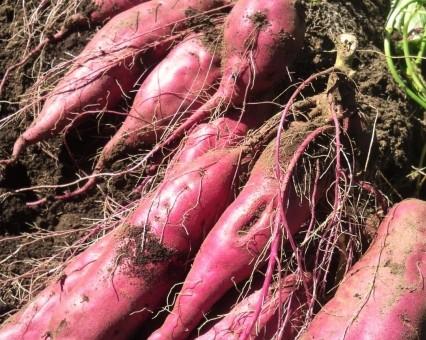 10月4日(金)お届けの野菜セット