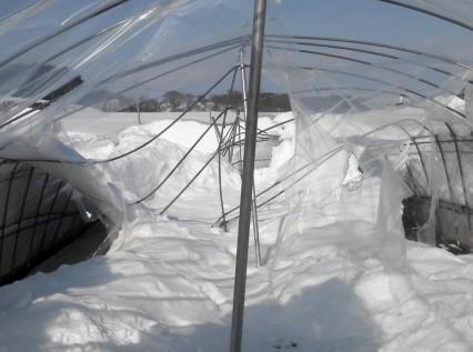 大雪の被害状況