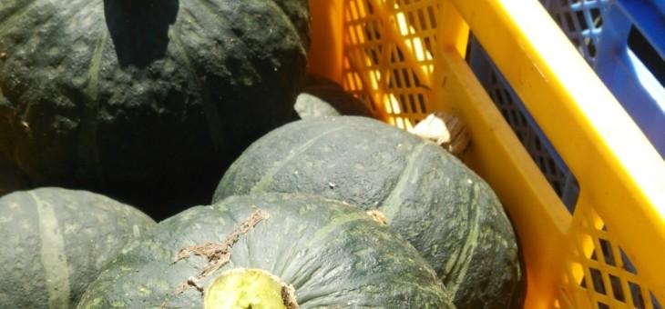 9月25日(金)お届けの野菜セット