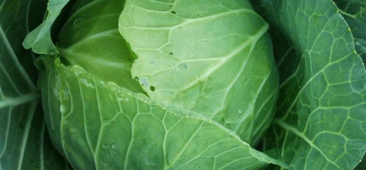 9月29日(火)お届けの野菜セット