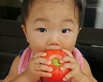 8月25日(火)お届けの野菜セット