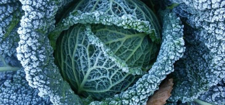 11月3日(火)お届けの野菜セット