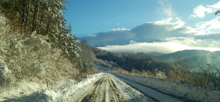 ひさびさの雪です