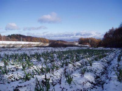 独立235日目 初雪