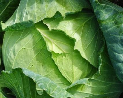 10月12日(金)お届けの野菜セット