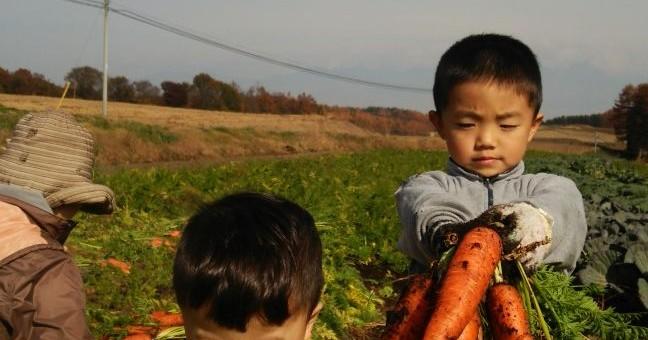 11月13日(金)お届けの野菜セット